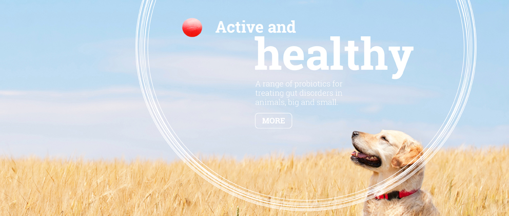 Active and healthy. A range of probiotics for treating gut disorders in animals, big and small.