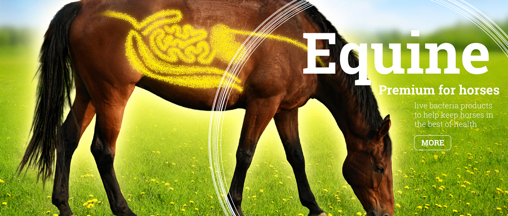 Equine Premium for horses. Live bacteria products to help keep horses in the best of health.