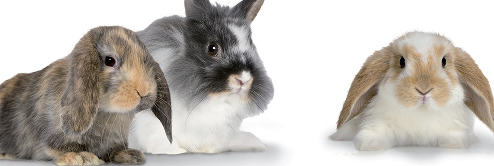 Pro-Fibre for Rabbits